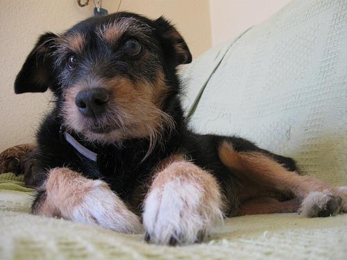 Older dogs make excellent pets. Photo via @kojotomoto on Flickr.