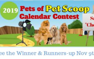PS Contest Wrap