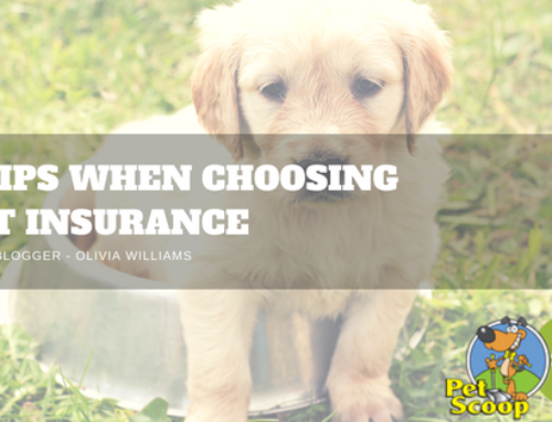 5 Tips When Choosing Pet Insurance