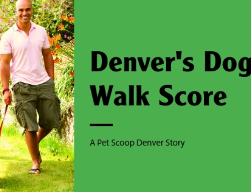 Dog Walking Score: How Does Denver Stack Up?