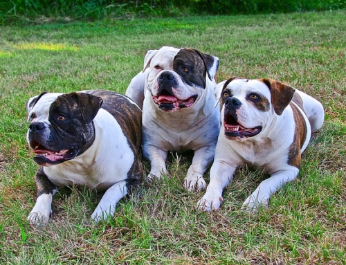 Adding a Second or Third Dog to Your Home